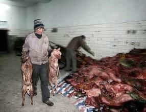 matan-perros-china07